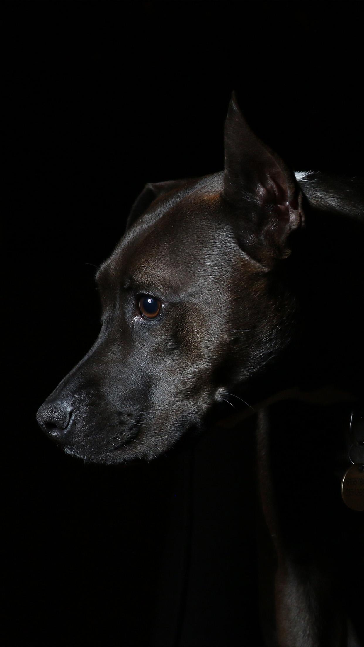 Nj37 Dog Dark Animal