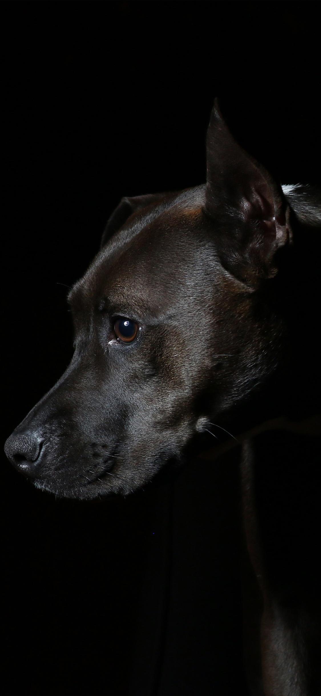 Iphonexpapers Com Iphone X Wallpaper Nj37 Dog Dark Animal