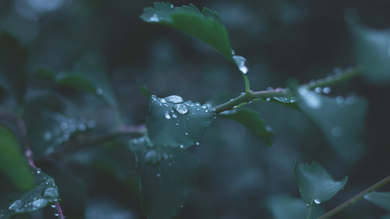 desktop-wallpaper-laptop-mac-macbook-air-nj39-leaf-water-rain-nature-green-wallpaper