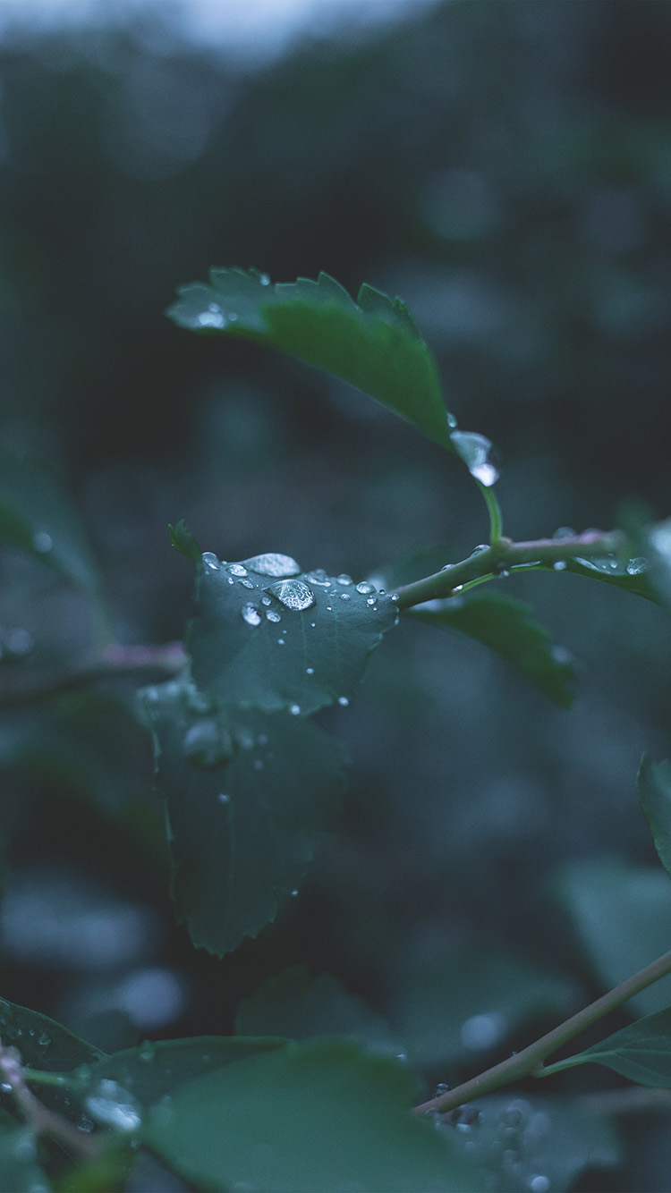 iPhone6papers.co-Apple-iPhone-6-iphone6-plus-wallpaper-nj39-leaf-water-rain-nature-green