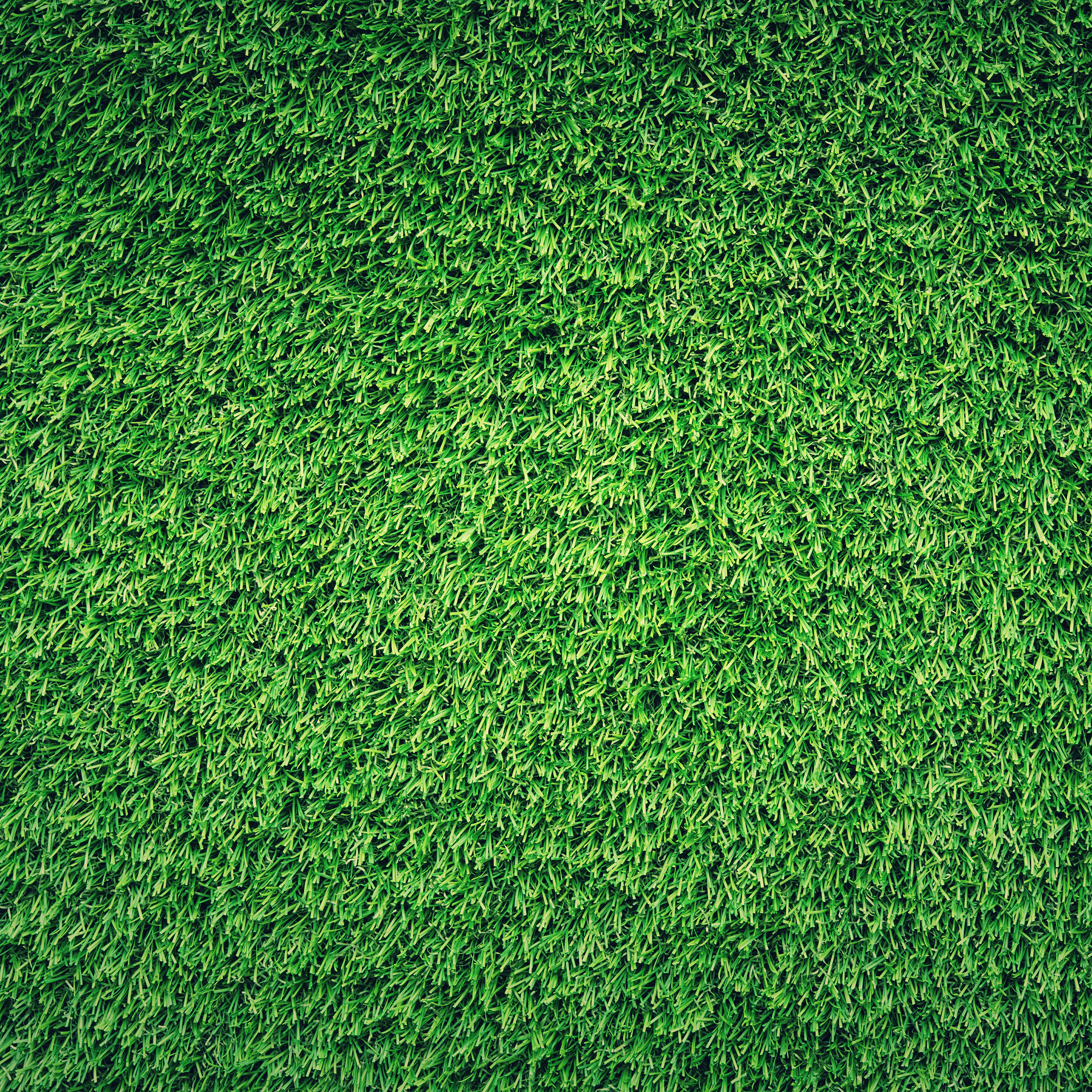 Lawn obsession creeps in