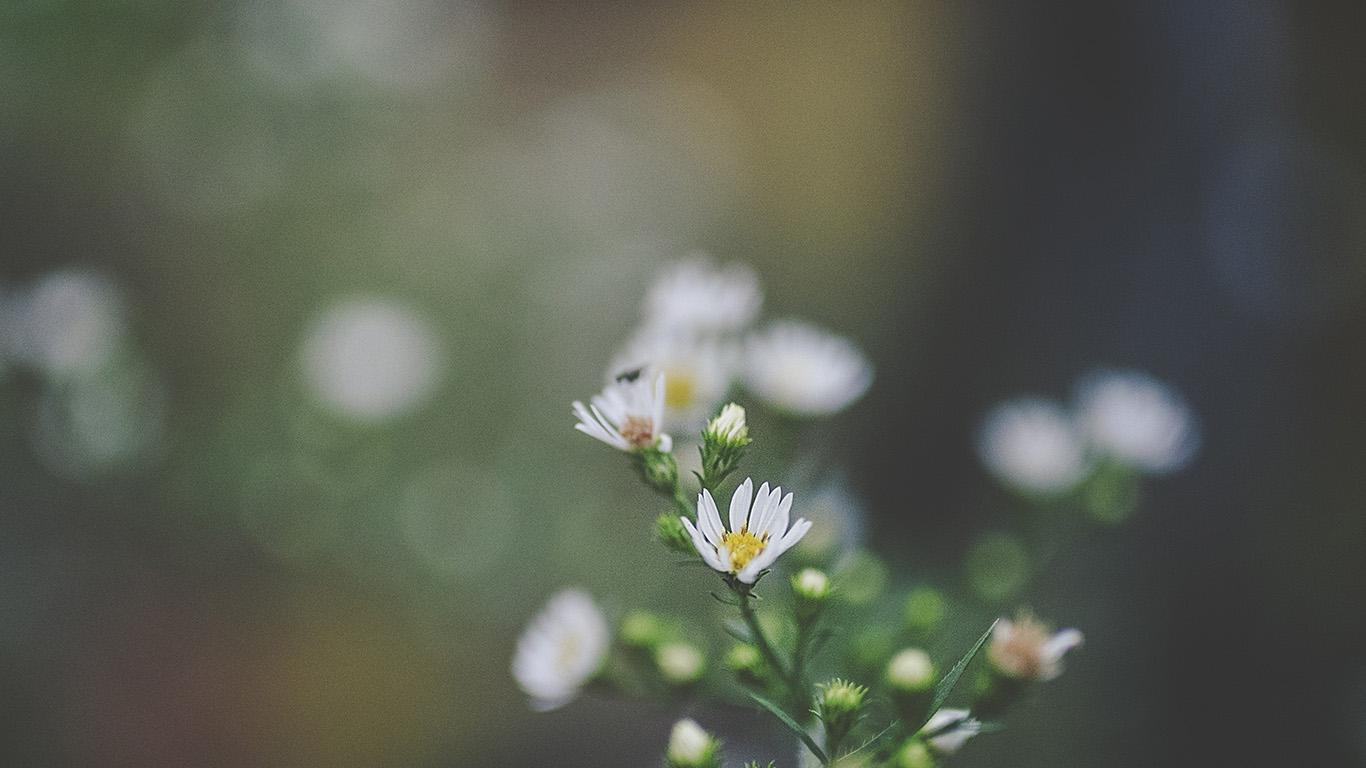 desktop-wallpaper-laptop-mac-macbook-air-nj64-bokeh-flower-nature-dark-wallpaper