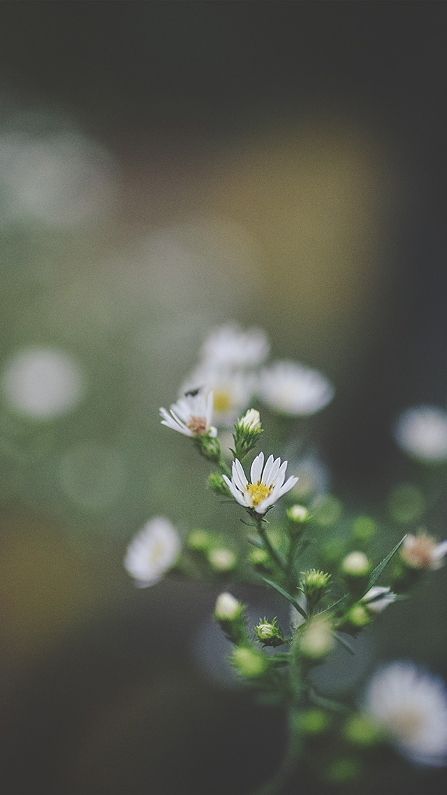 freeios8.com-iphone-4-5-6-plus-ipad-ios8-nj64-bokeh-flower-nature-dark