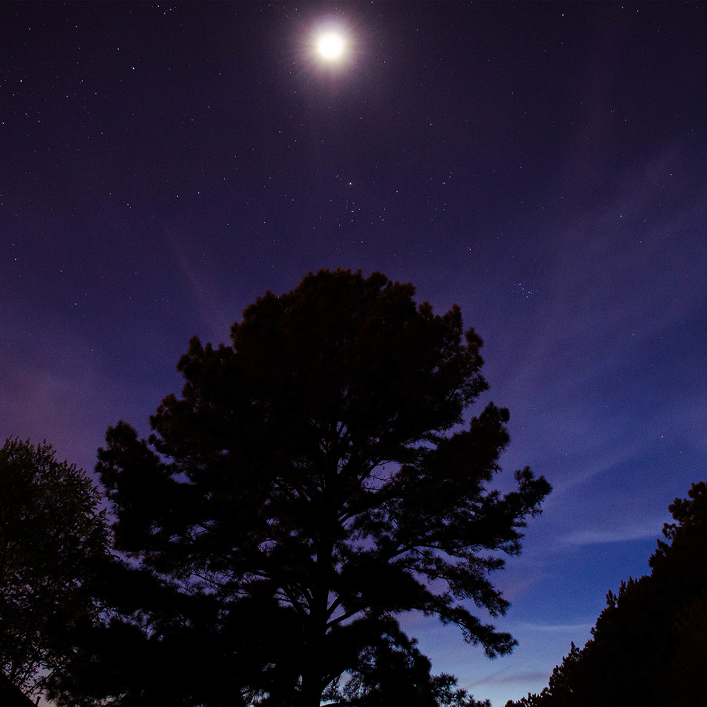 android-wallpaper-nj67-one-star-shine-night-dark-blue-sky-wood-wallpaper