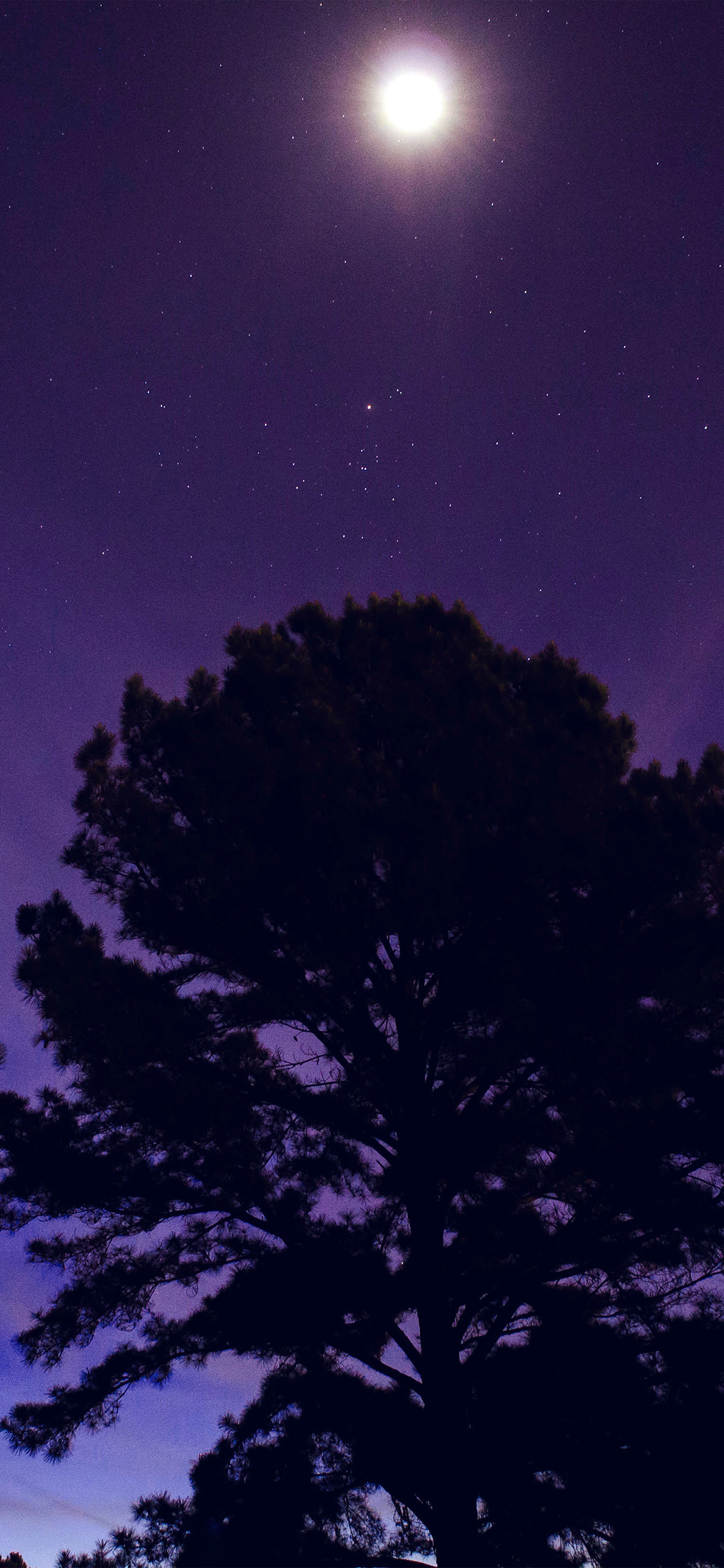 iPhonexpapers.com-Apple-iPhone-wallpaper-nj68-one-star-shine-night-dark-blue-sky-wood-purple