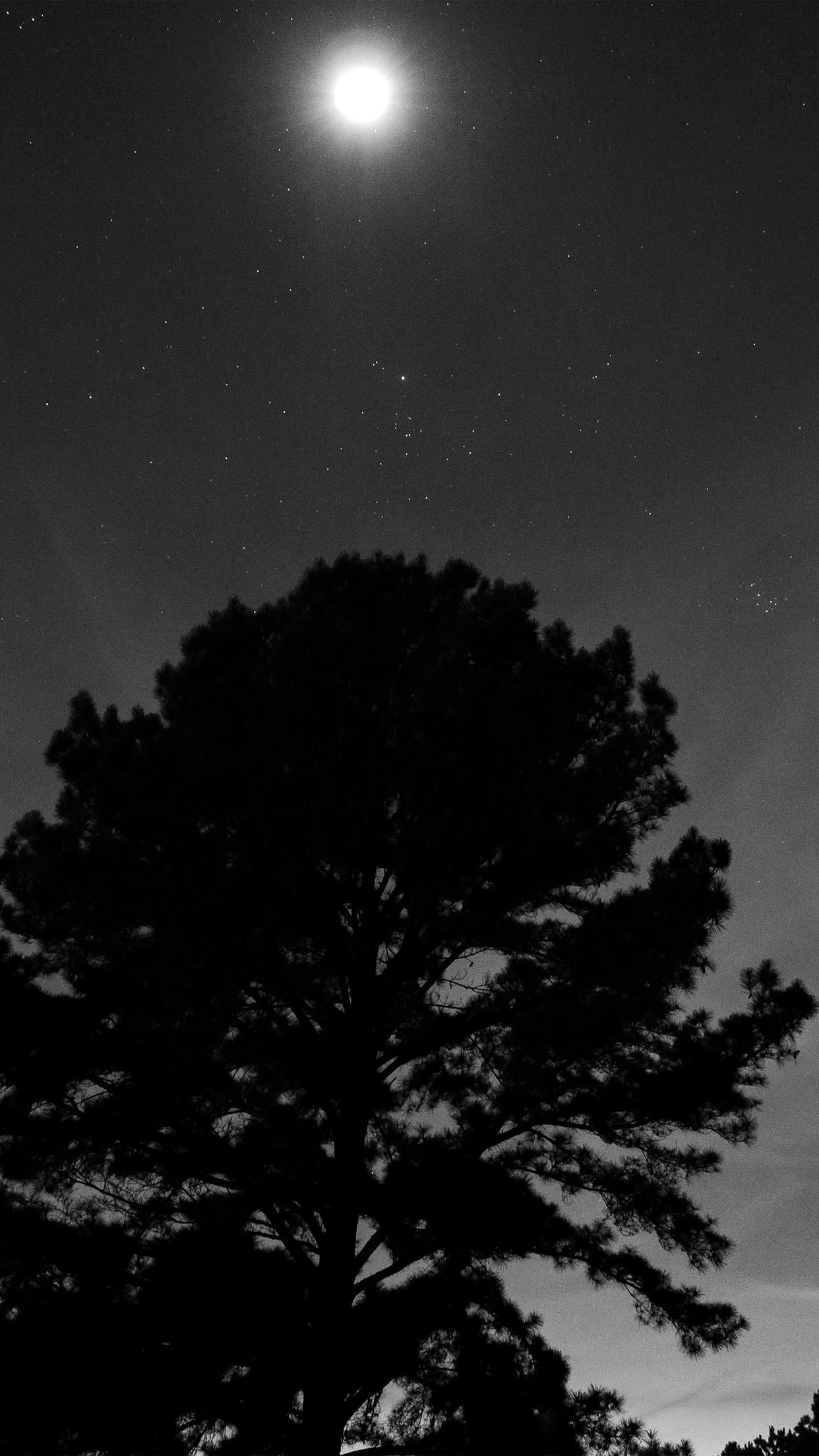 Nj69 One Star Shine Night Dark Sky Wood Bw