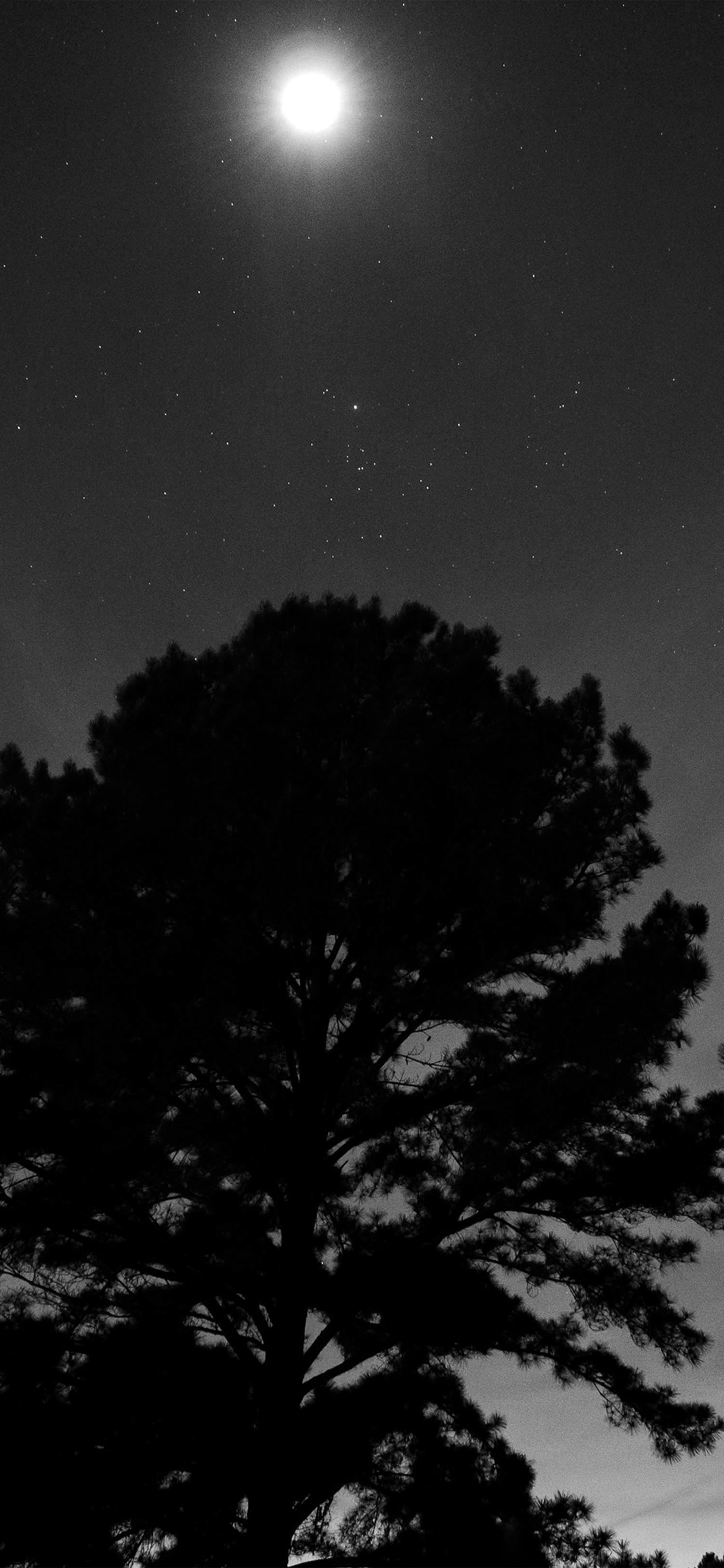 iPhoneXpapers.com-Apple-iPhone-wallpaper-nj69-one-star-shine-night-dark-sky-wood-bw