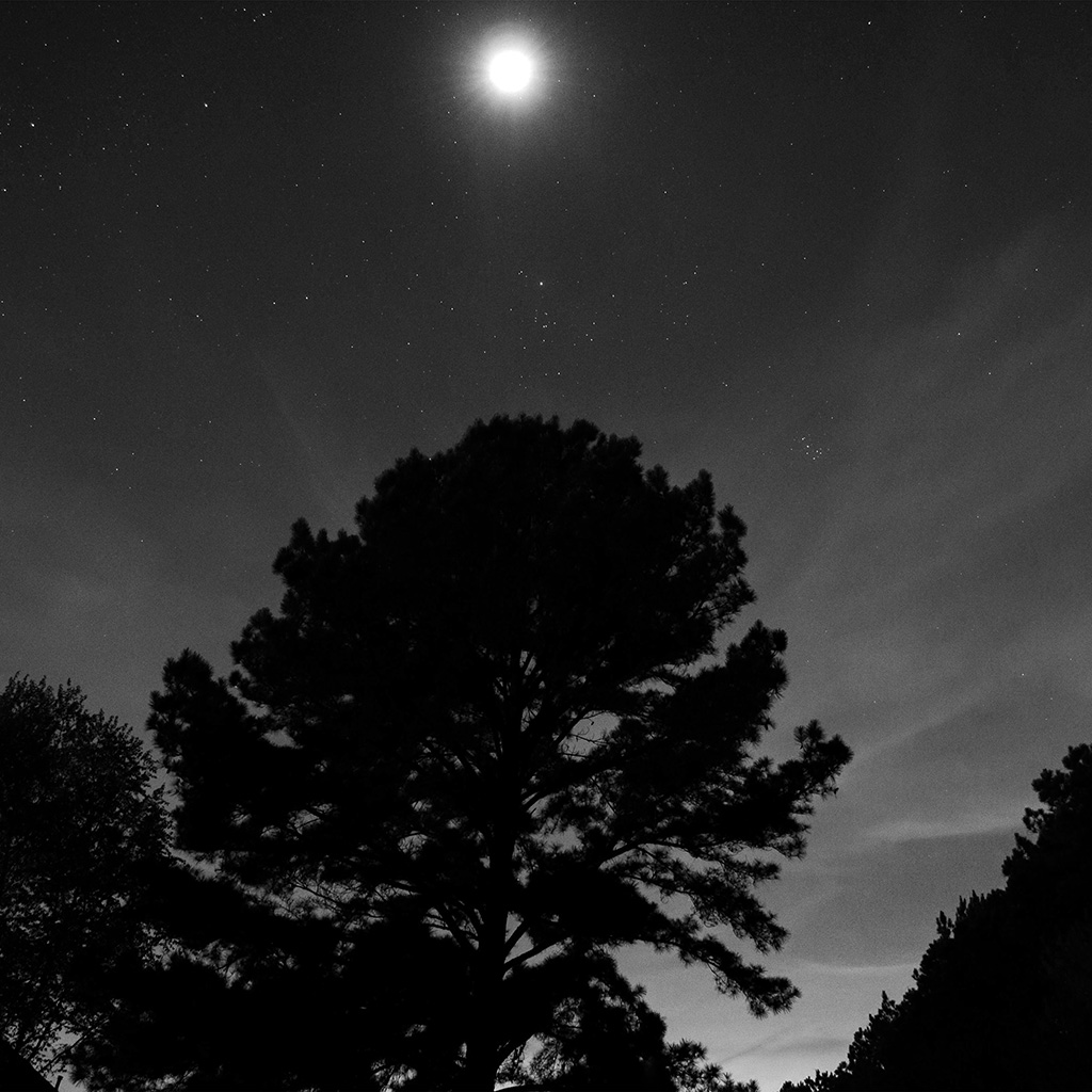 wallpaper-nj69-one-star-shine-night-dark-sky-wood-bw-wallpaper