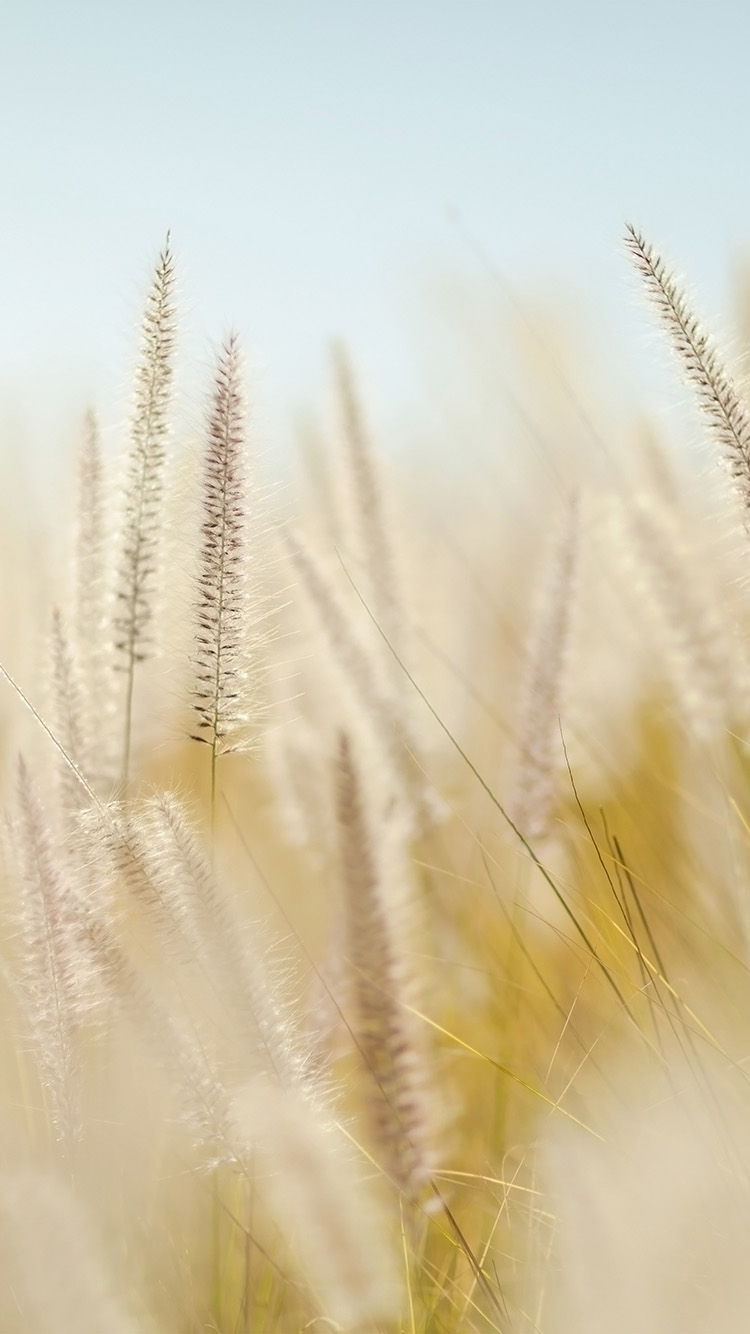 iPhone6papers.co-Apple-iPhone-6-iphone6-plus-wallpaper-nj86-rye-field-bokeh-fruit-yellow