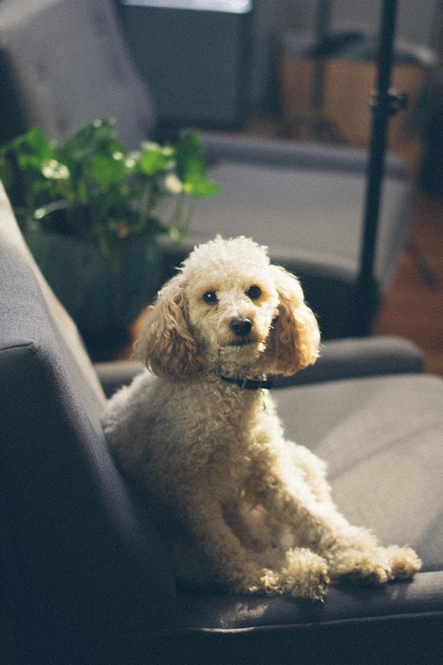essay on dog as a domestic animal