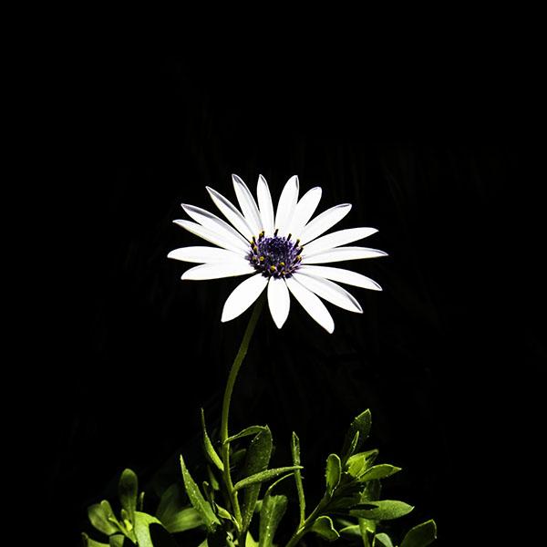 iPapers.co-Apple-iPhone-iPad-Macbook-iMac-wallpaper-nk01-flower-white-spring-wallpaper