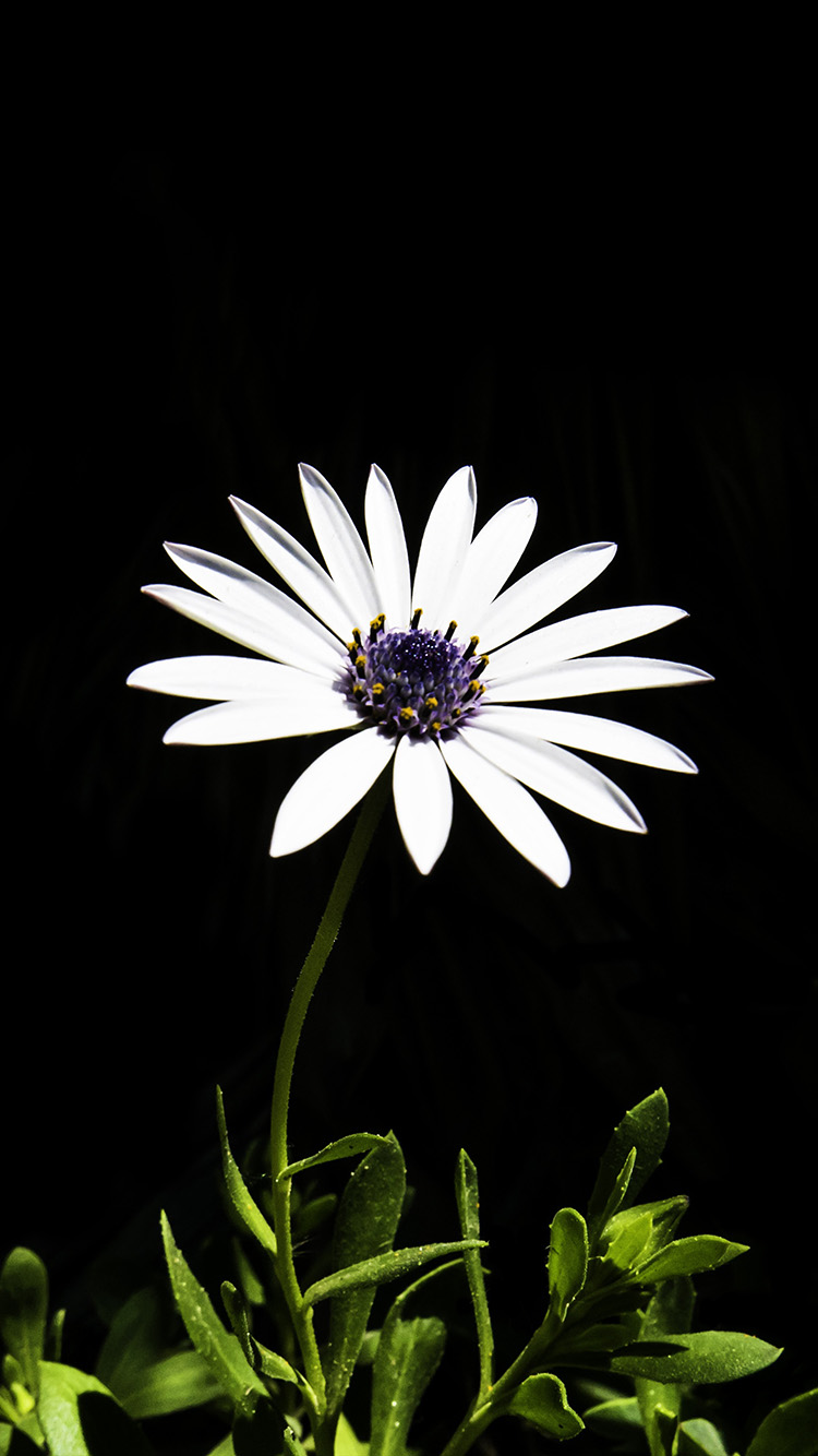 iPhonepapers.com-Apple-iPhone8-wallpaper-nk01-flower-white-spring