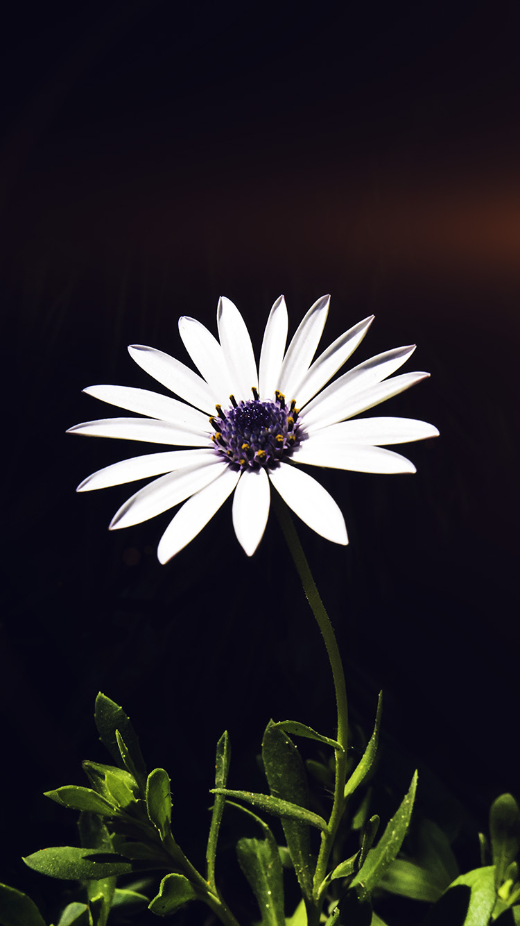 iPhone7papers.com-Apple-iPhone7-iphone7plus-wallpaper-nk02-flower-white-spring-flare