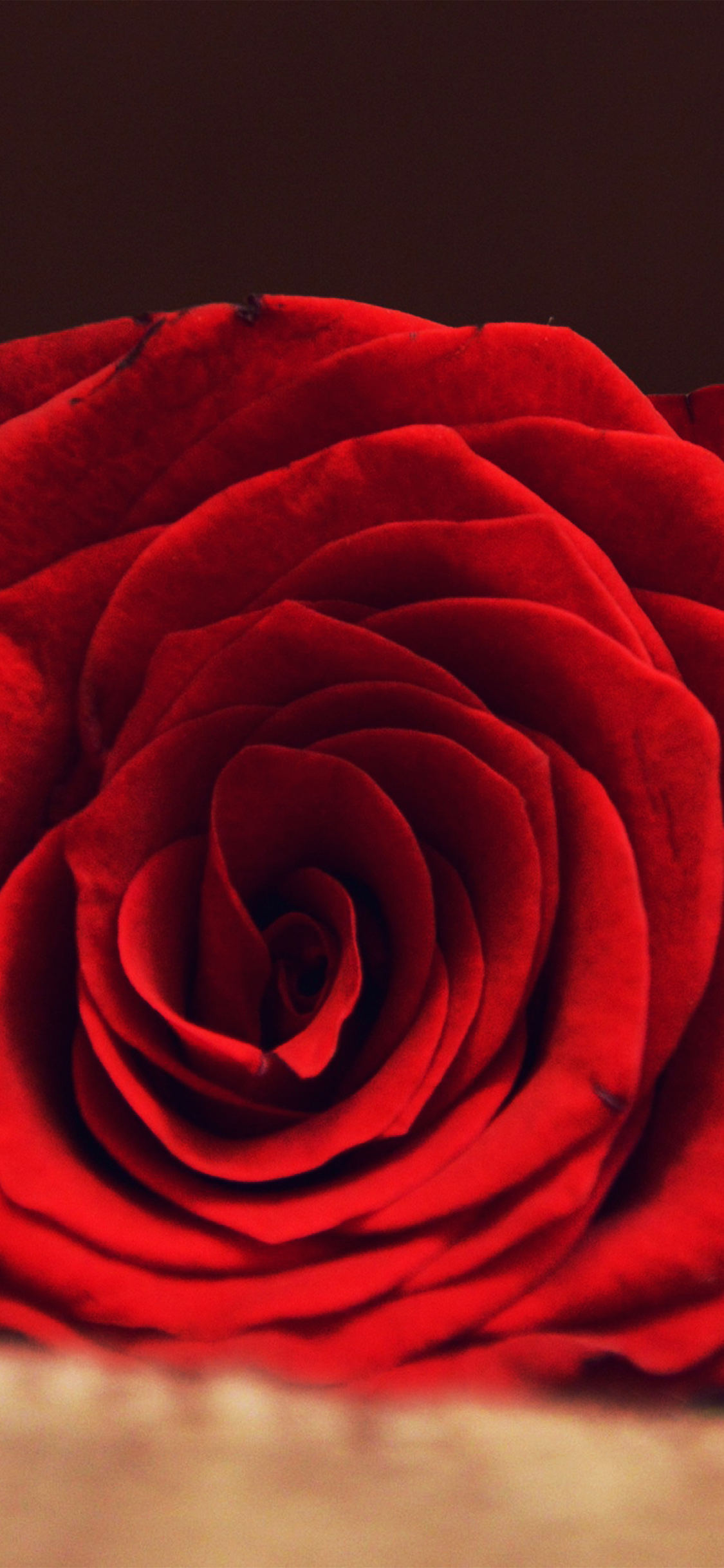 iPhonexpapers.com-Apple-iPhone-wallpaper-nk04-rose-flower-red-spring-love-hot