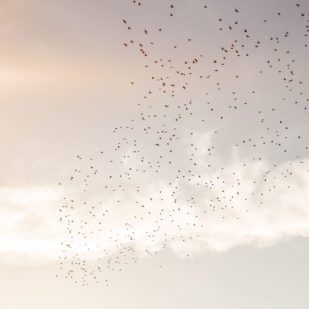 wallpaper-nk10-sky-birds-clear-cloud-flare-wallpaper