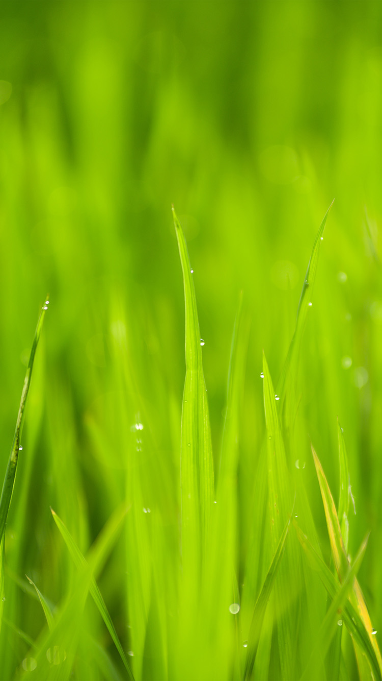 iPhone6papers.co-Apple-iPhone-6-iphone6-plus-wallpaper-nk13-lawn-flower-rain-bokeh-green