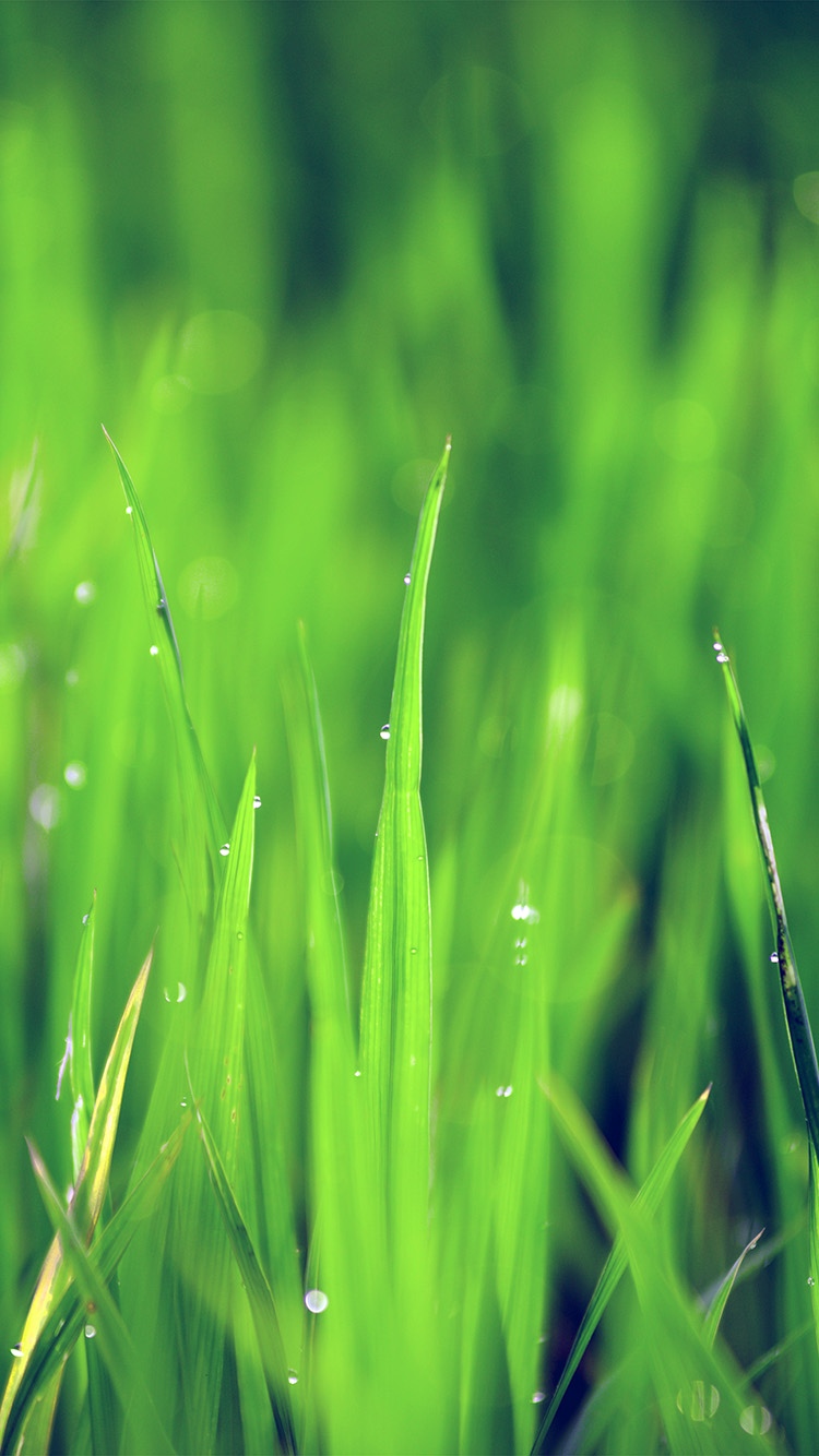 Papers.co-iPhone5-iphone6-plus-wallpaper-nk14-lawn-flower-rain-bokeh-green-blue