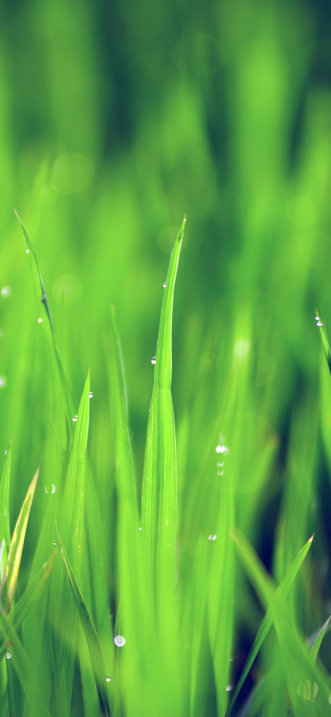 iPhonexpapers.com-Apple-iPhone-wallpaper-nk14-lawn-flower-rain-bokeh-green-blue