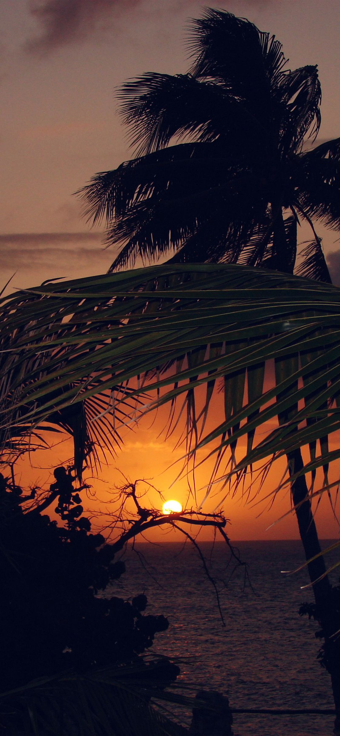 papers.co nk20 beach sunset sea tree nature holiday 41 iphone wallpaper