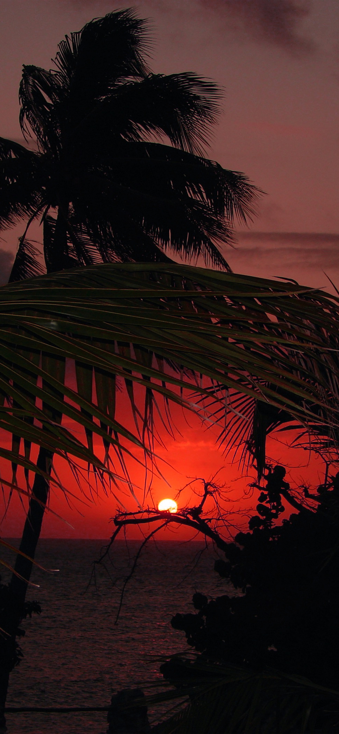 iPhonexpapers.com-Apple-iPhone-wallpaper-nk21-beach-sunset-sea-tree-nature-holiday-red