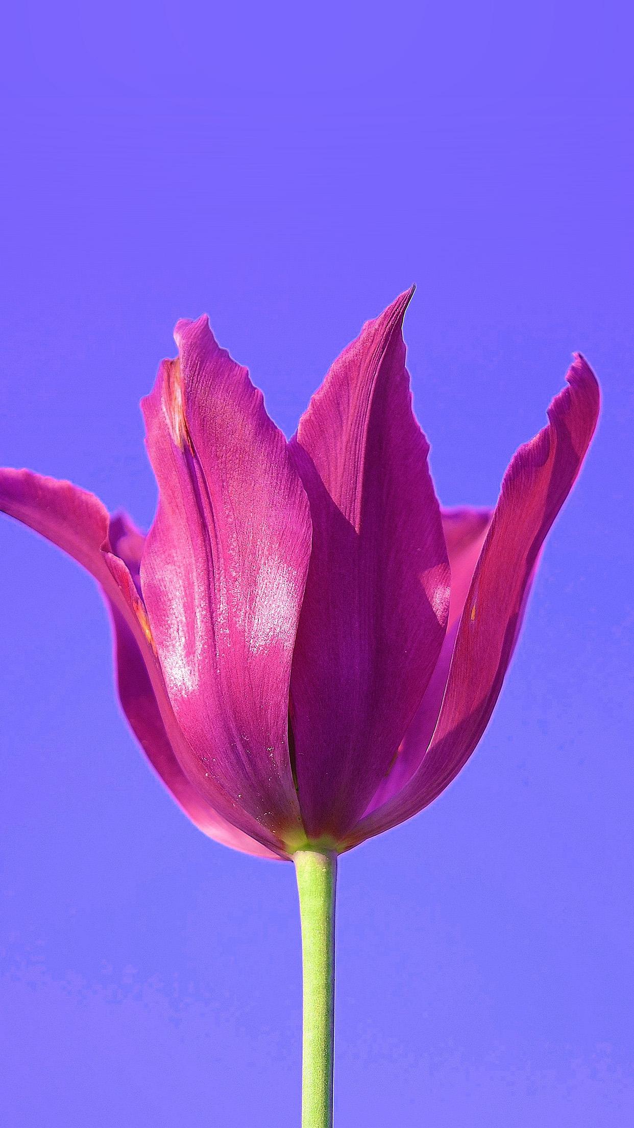 nk37-flower-art-minimal-purple-red-nature