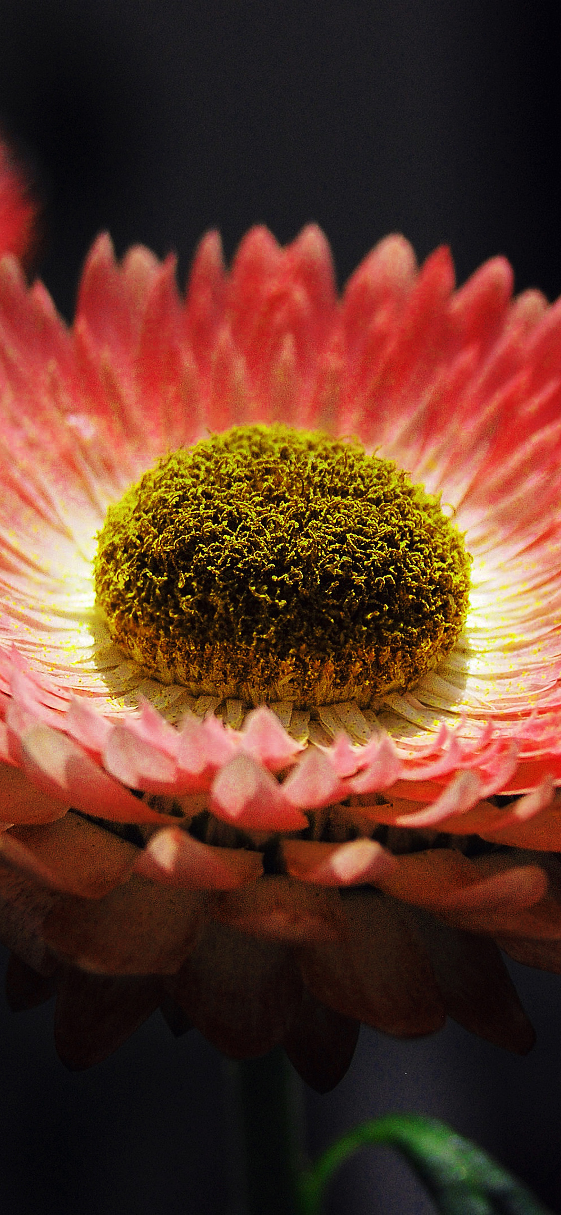 iPhonexpapers.com-Apple-iPhone-wallpaper-nk40-bokeh-flower-pink-nature-beautiful-orange