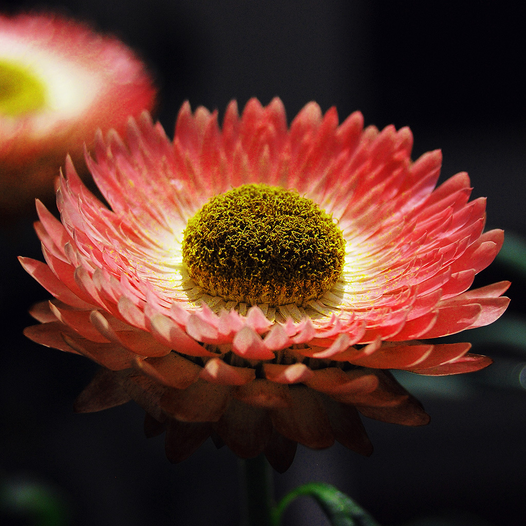 wallpaper-nk40-bokeh-flower-pink-nature-beautiful-orange-wallpaper