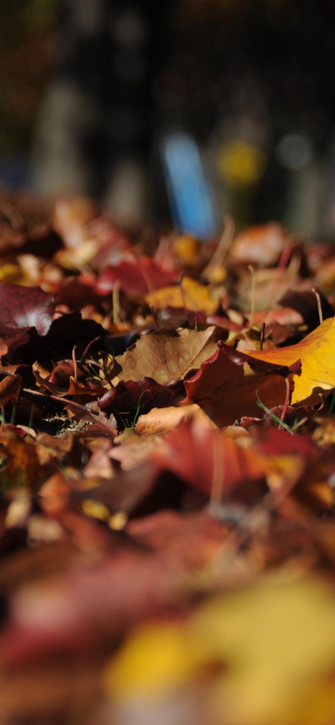 iPhoneXpapers.com-Apple-iPhone-wallpaper-nk44-fall-mountain-leaf-brown-bokeh-nature