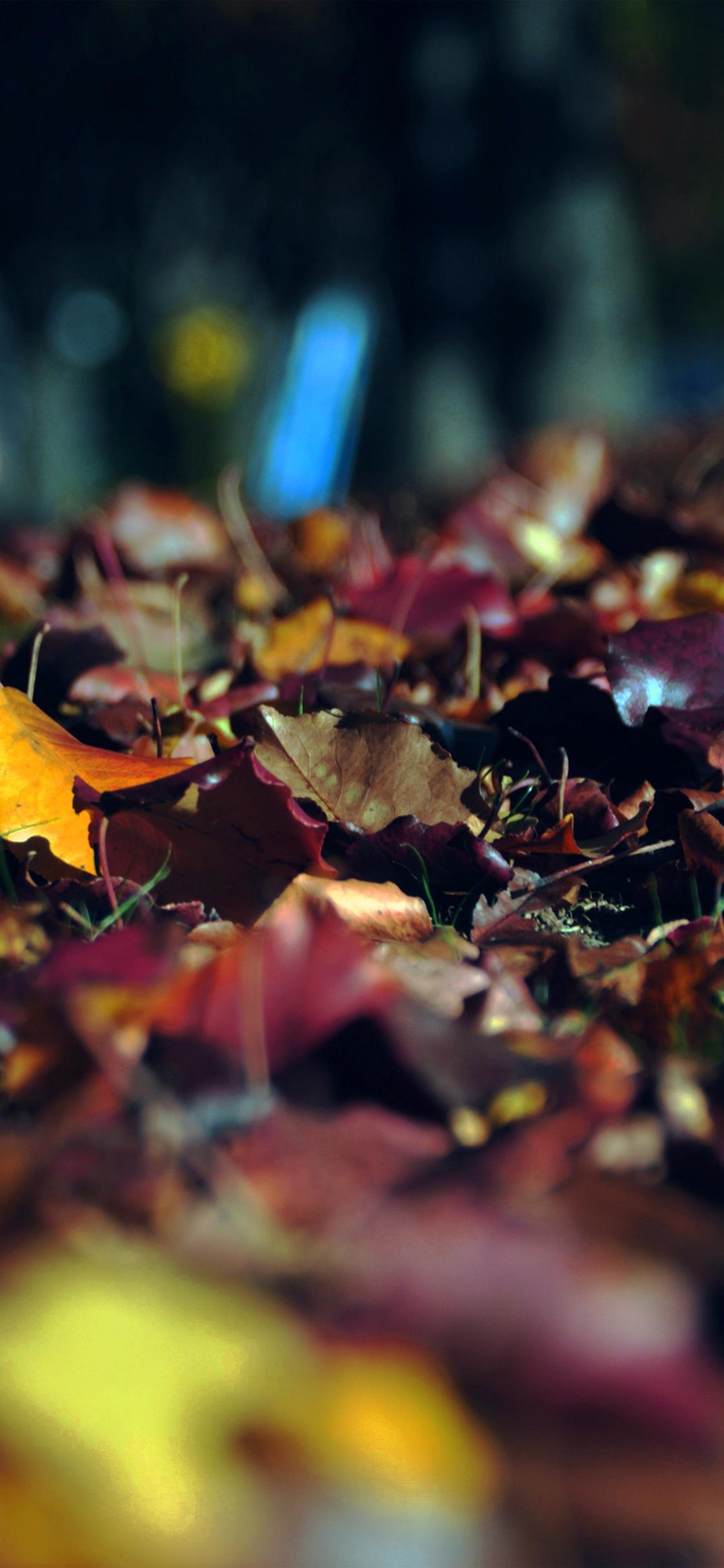 Iphone11papers Com Iphone11 Wallpaper Nk45 Fall Mountain Leaf Brown Bokeh Nature Dark