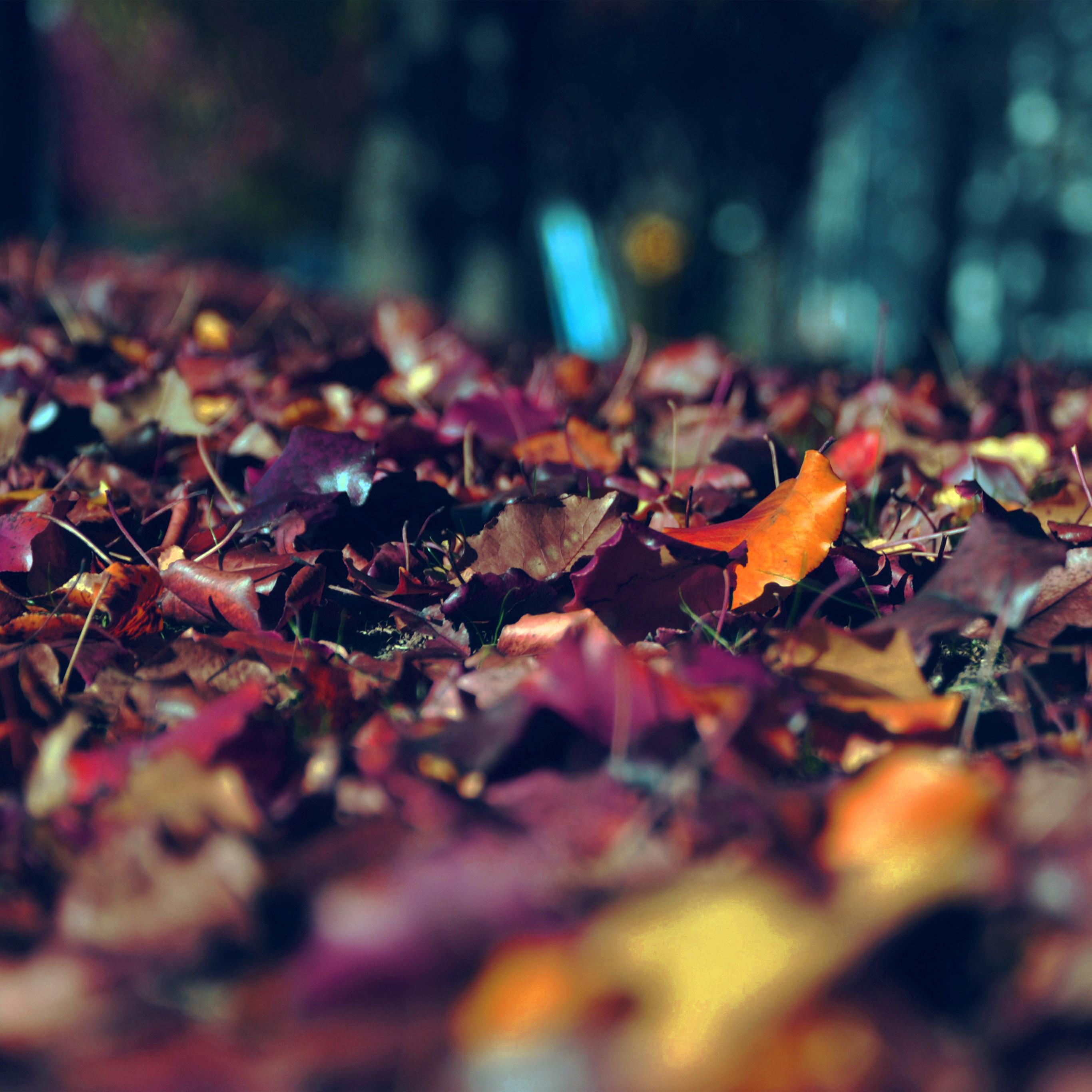 Nk46 Fall Mountain Leaf Brown Bokeh Nature Dark Blue Wallpaper
