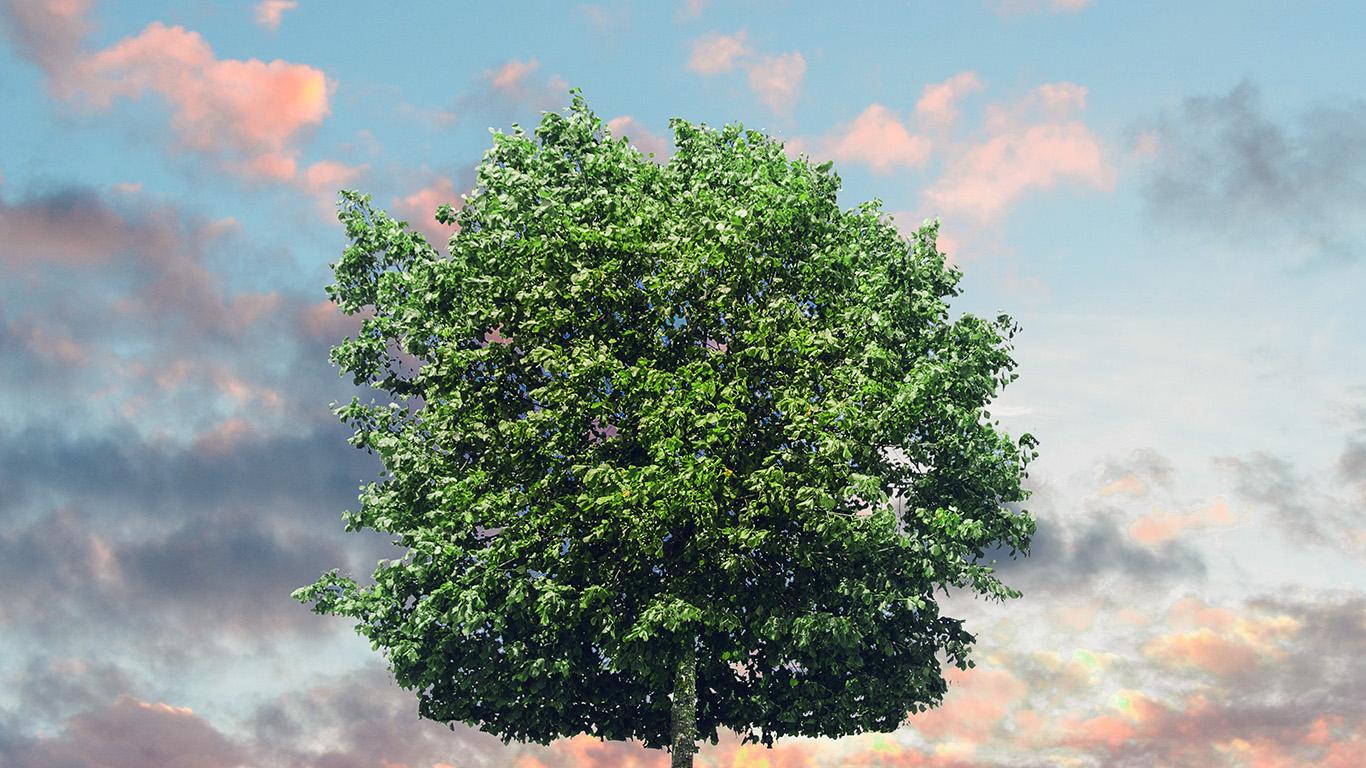 desktop-wallpaper-laptop-mac-macbook-air-nk49-tree-nature-solo-nature-green-wallpaper