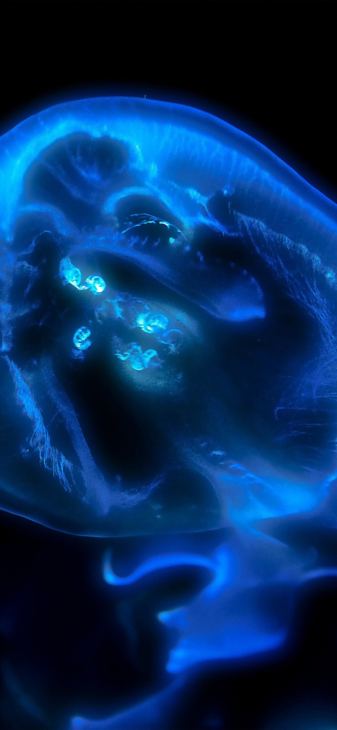 iPhoneXpapers.com-Apple-iPhone-wallpaper-nk63-jellyfish-blue-sea-animal