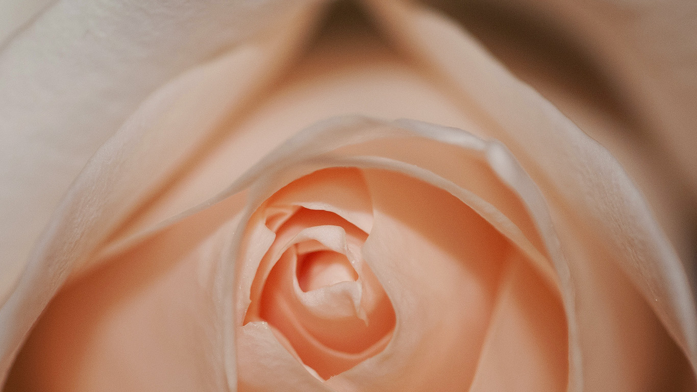 desktop-wallpaper-laptop-mac-macbook-air-nk76-flower-pink-rose-love-wallpaper
