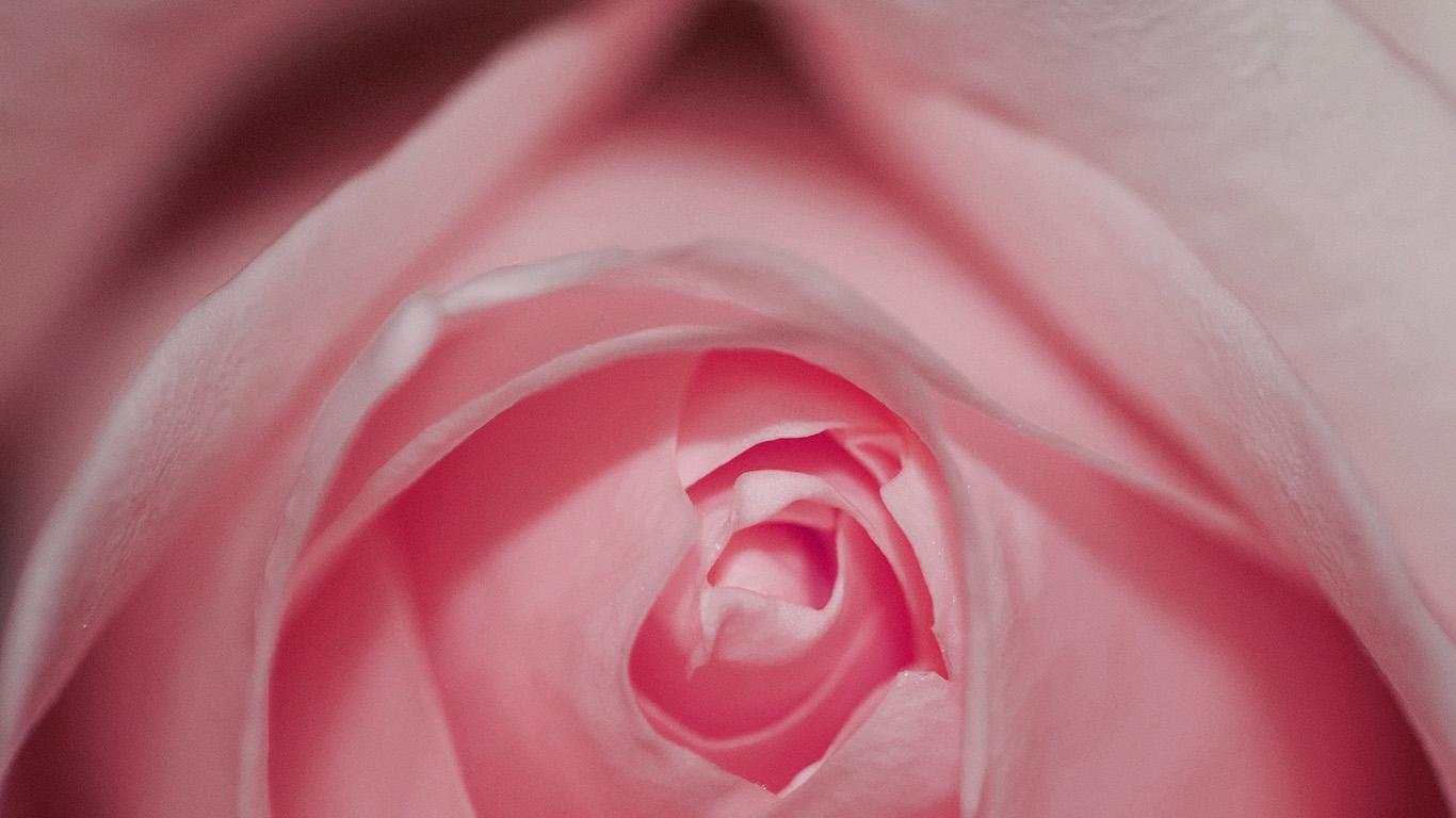 desktop-wallpaper-laptop-mac-macbook-air-nk77-flower-pink-rose-love-red-wallpaper