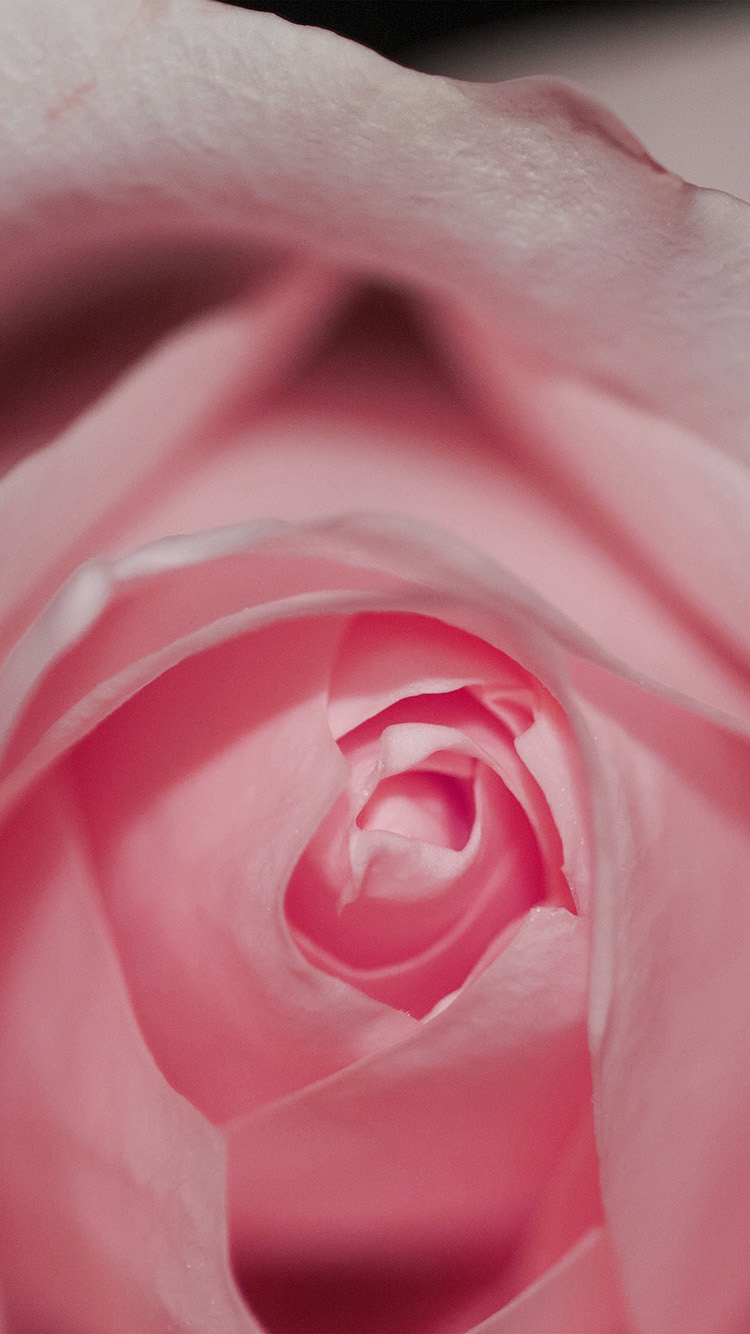 iPhone7papers.com-Apple-iPhone7-iphone7plus-wallpaper-nk77-flower-pink-rose-love-red