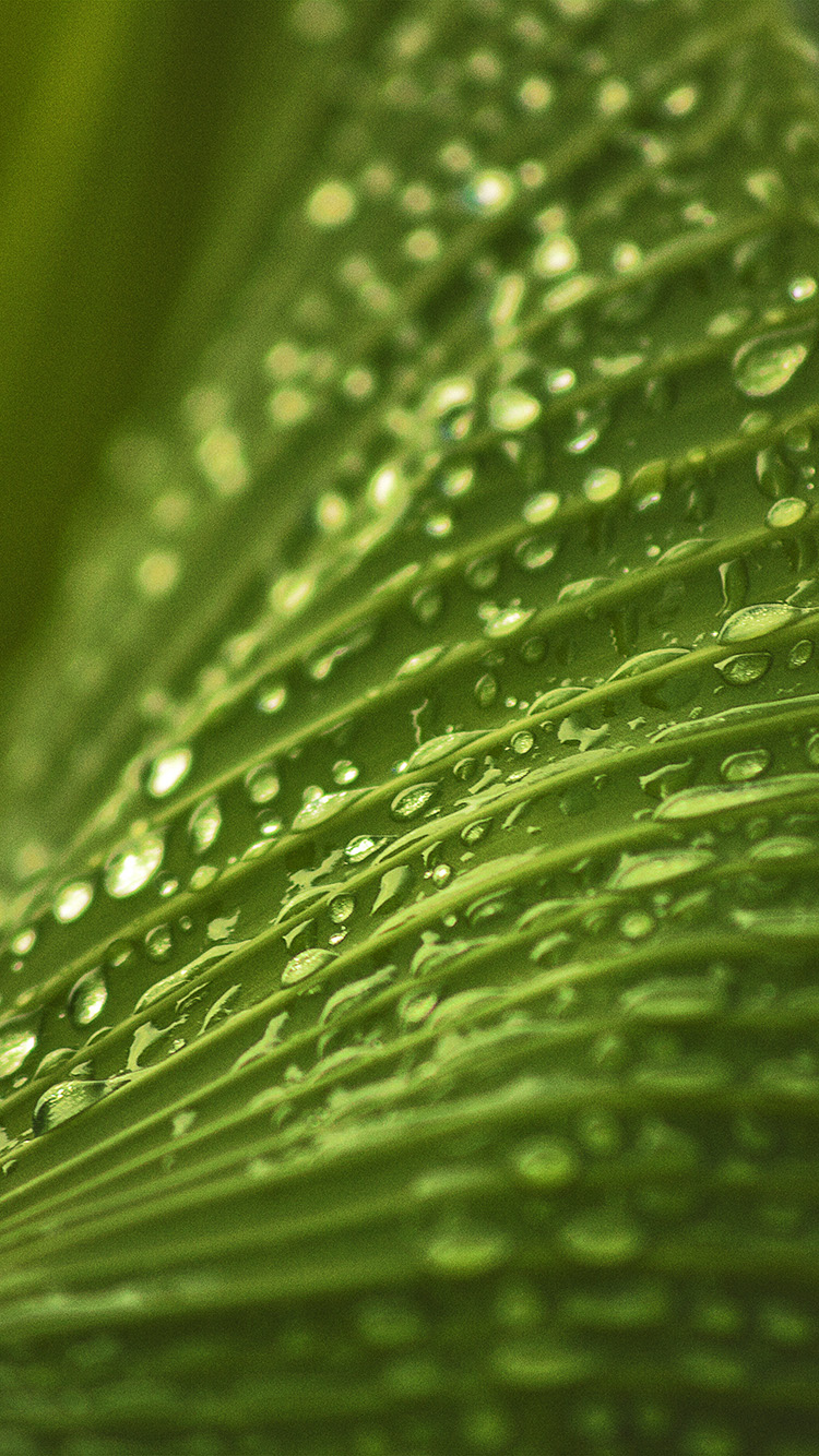 iPhone7papers.com-Apple-iPhone7-iphone7plus-wallpaper-nk92-leaf-rain-summer-green-bokeh-nature