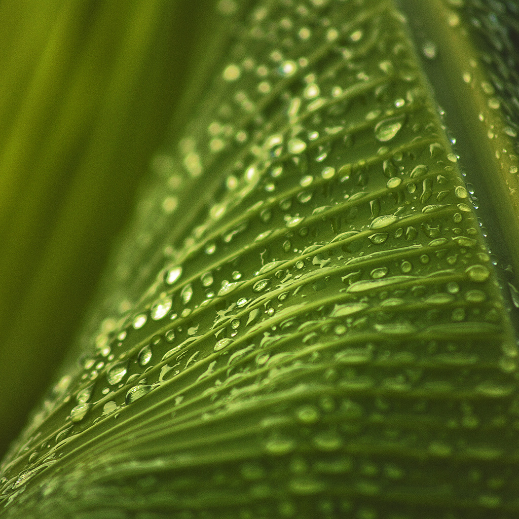 wallpaper-nk92-leaf-rain-summer-green-bokeh-nature-wallpaper