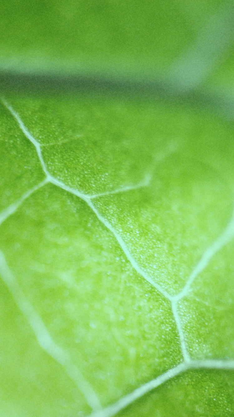 iPhone6papers.co-Apple-iPhone-6-iphone6-plus-wallpaper-nl26-leaf-zoom-green-nature-bokeh