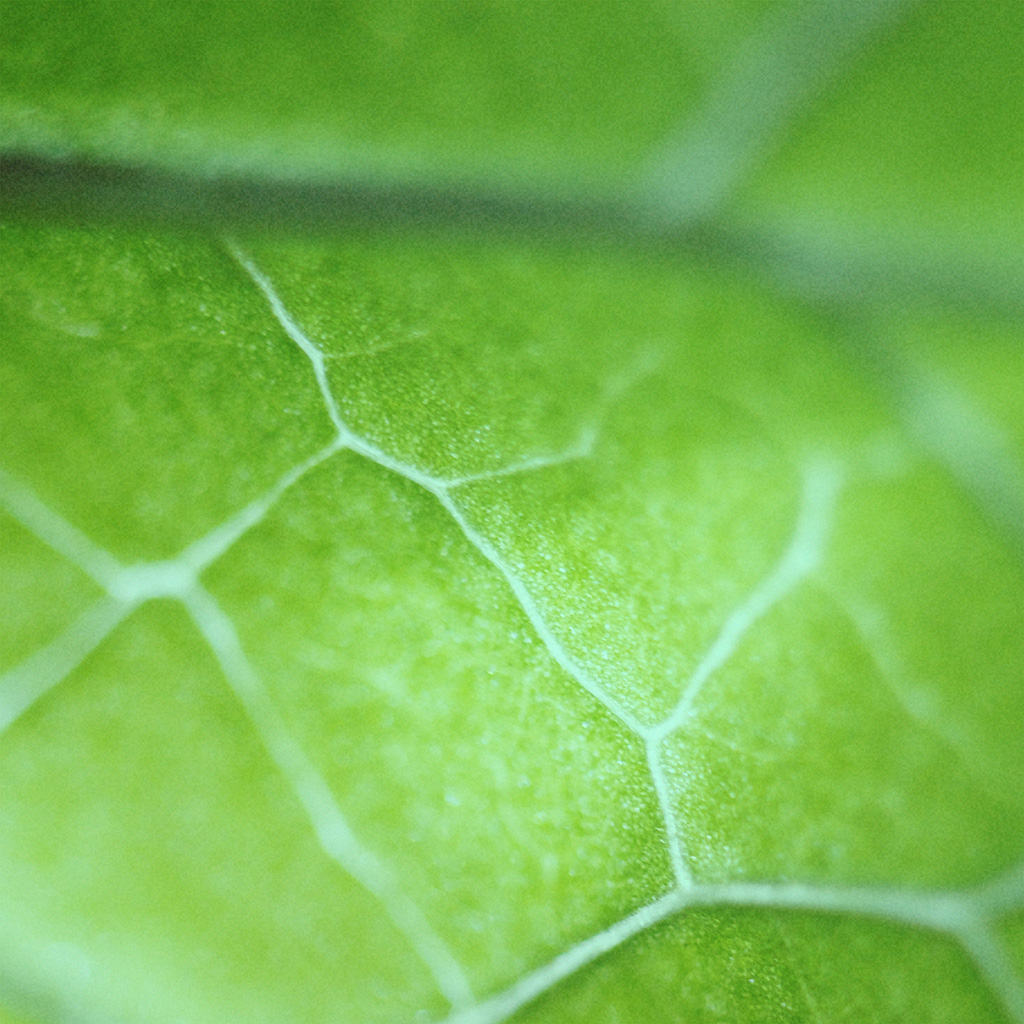 nl26-leaf-zoom-green-nature-bokeh-wallpaper