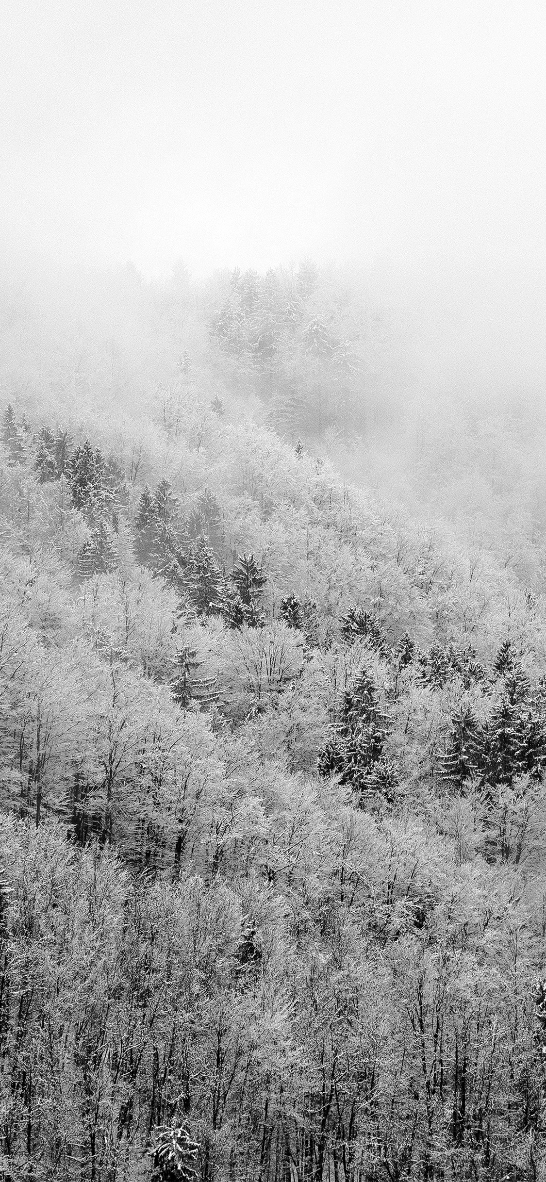 iPhonexpapers.com-Apple-iPhone-wallpaper-nl42-mountain-wood-winter-christmas-bw-dark