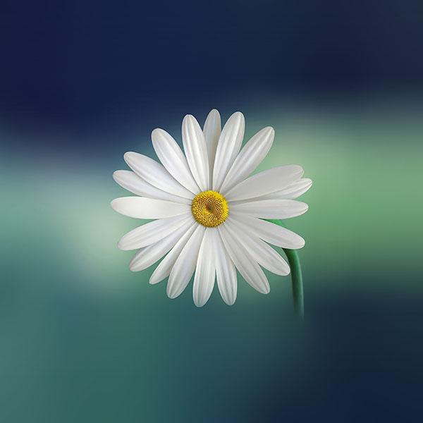 iPapers.co-Apple-iPhone-iPad-Macbook-iMac-wallpaper-nl55-flower-blue-green-nature-wallpaper