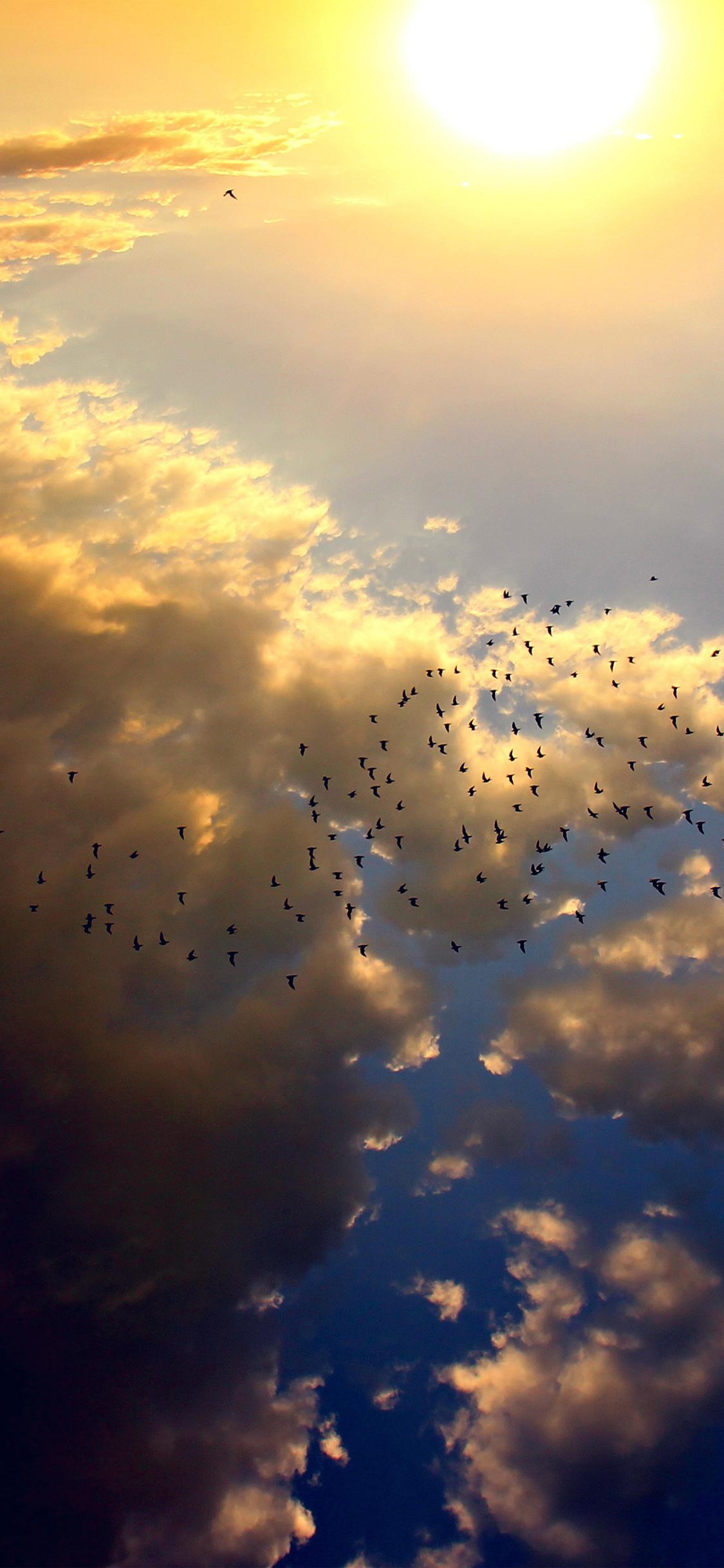 iPhoneXpapers.com-Apple-iPhone-wallpaper-nl72-sky-bird-fly-summer-sun-nature
