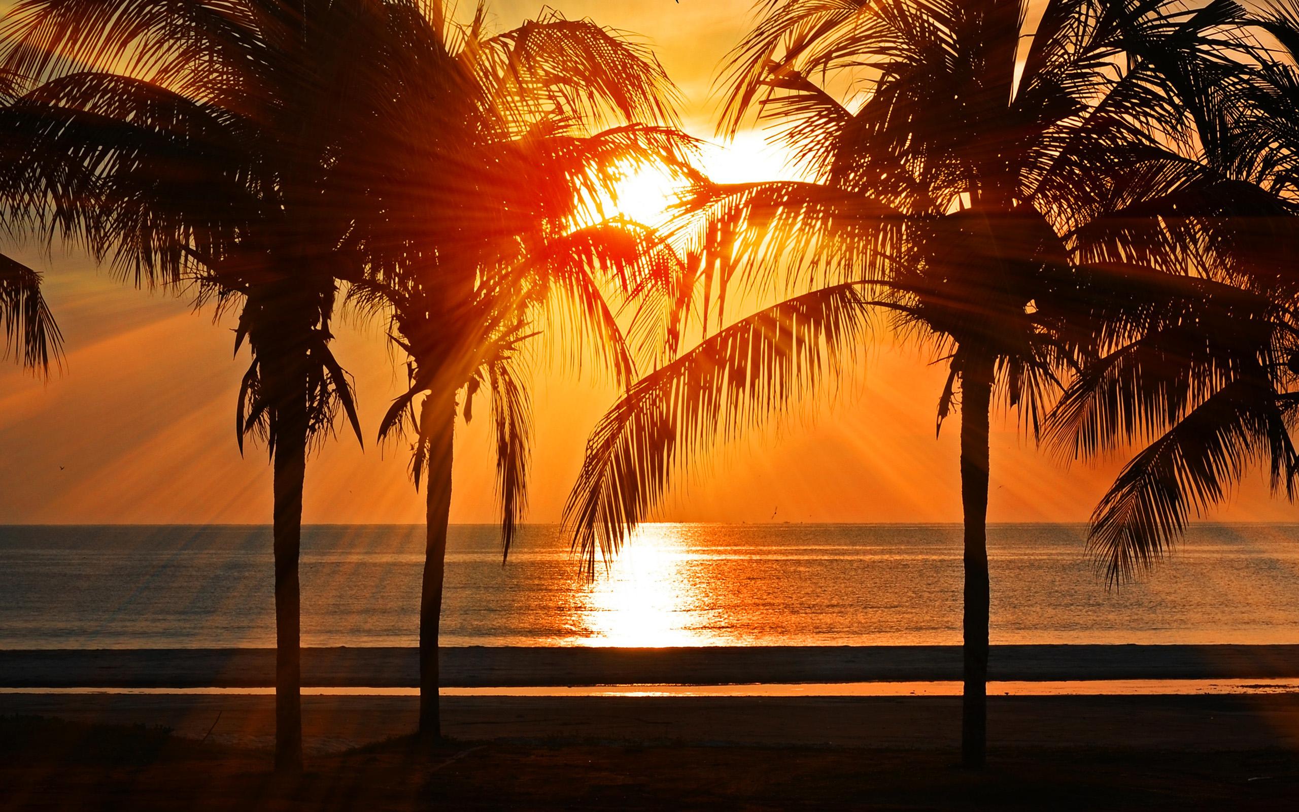Tropics Palm Trees Sun Beach 4k Hd Desktop Wallpaper For: Nl74-beach-vacation-summer-night-sunset-red-palm-tree