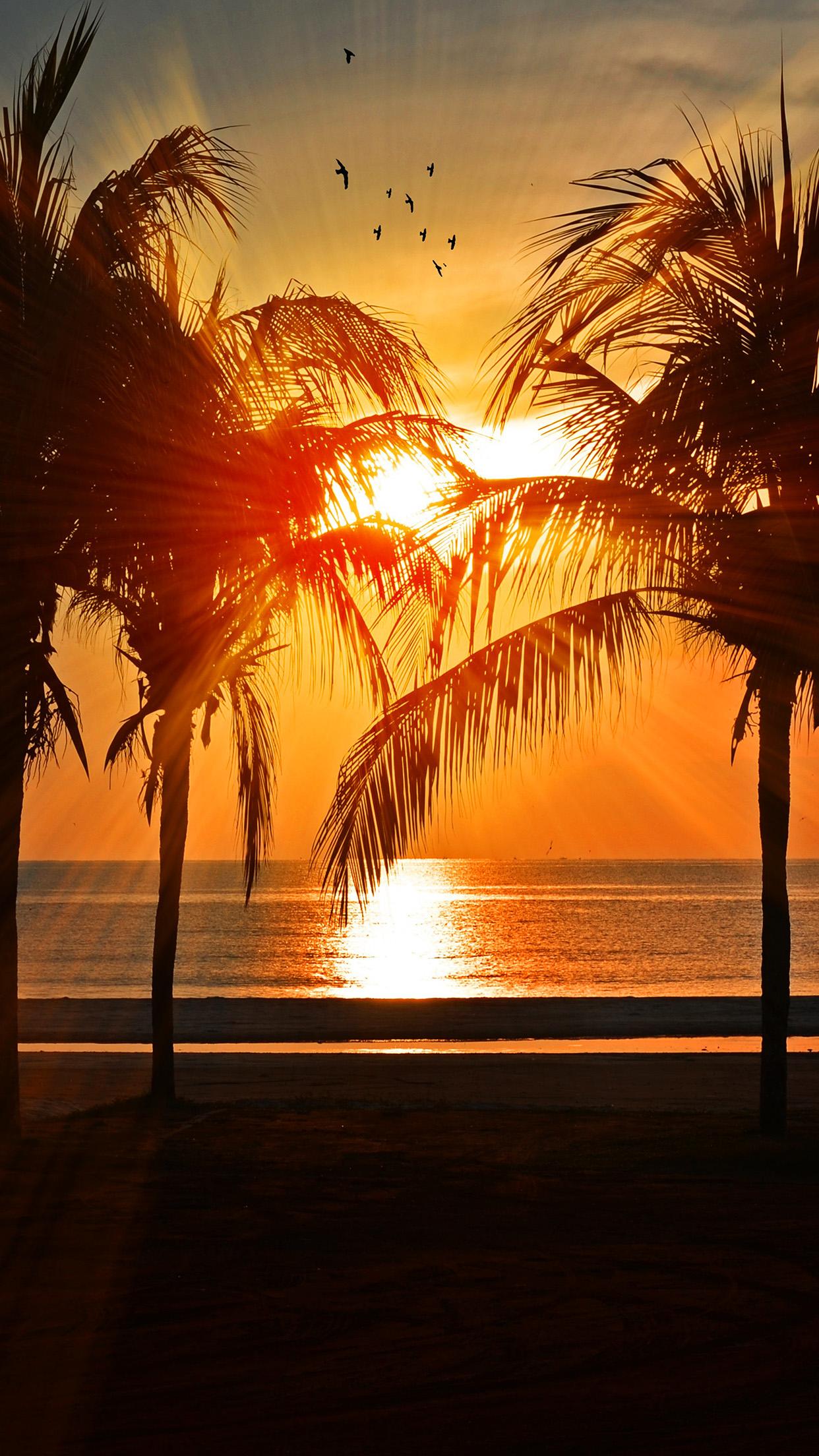 nl74-beach-vacation-summer-night-sunset-red-palm-tree ...