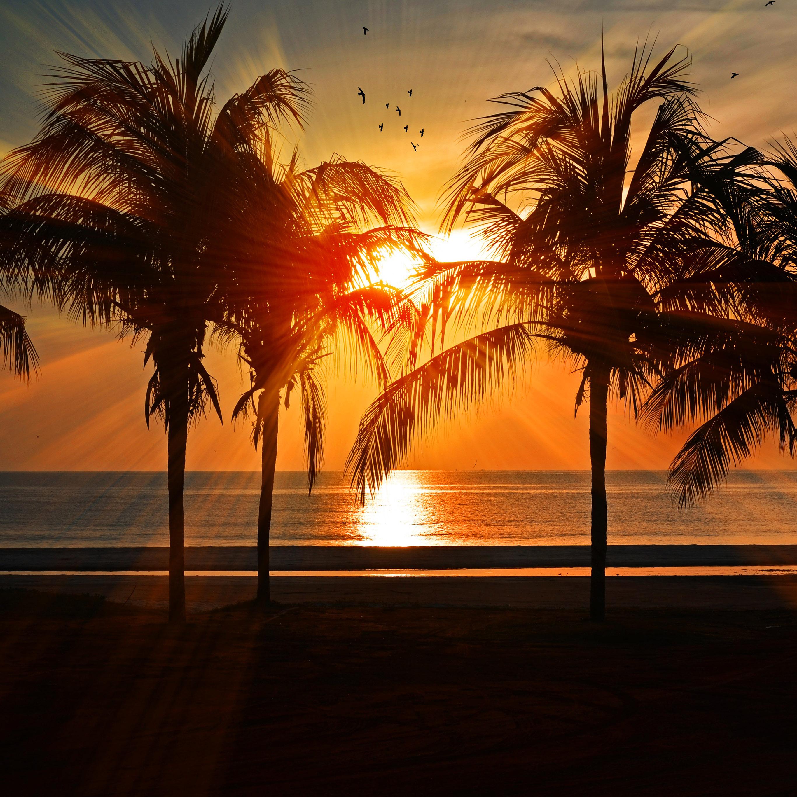 Nl74 Beach Vacation Summer Night Sunset Red Palm Tree Wallpaper