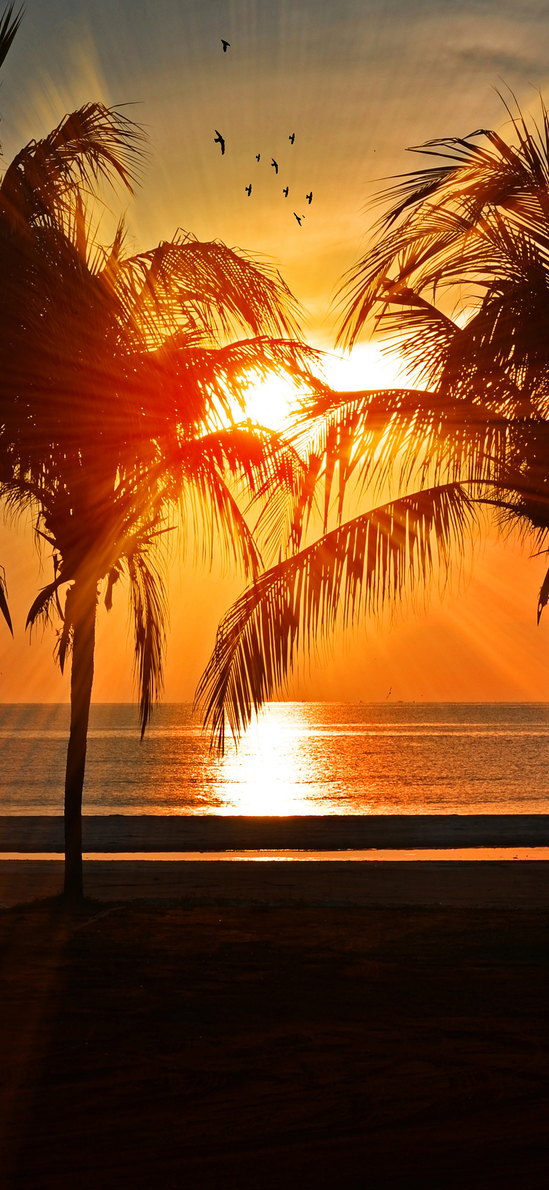 iPhoneXpapers.com-Apple-iPhone-wallpaper-nl74-beach-vacation-summer-night-sunset-red-palm-tree