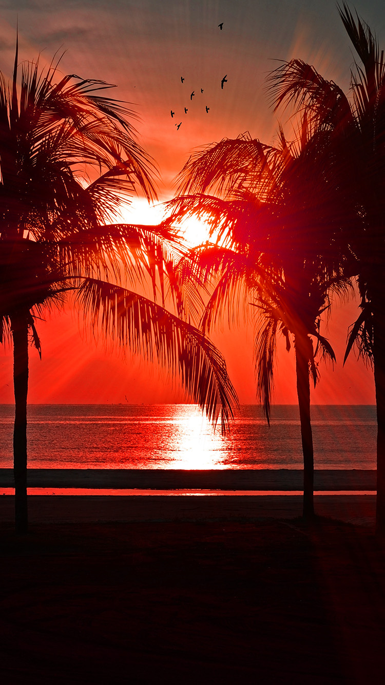 iPhone7papers.com-Apple-iPhone7-iphone7plus-wallpaper-nl75-beach-vacation-summer-night-sunset-red-palm-tree-dark