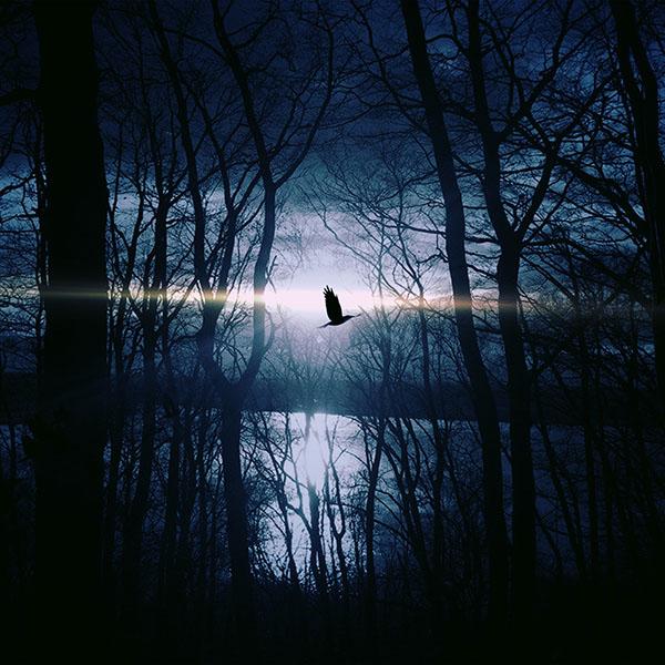 iPapers.co-Apple-iPhone-iPad-Macbook-iMac-wallpaper-nl87-wood-night-dark-nature-bird-fly-lake-wallpaper