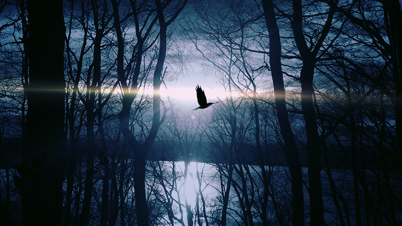wallpaper-desktop-laptop-mac-macbook-nl87-wood-night-dark-nature-bird-fly-lake