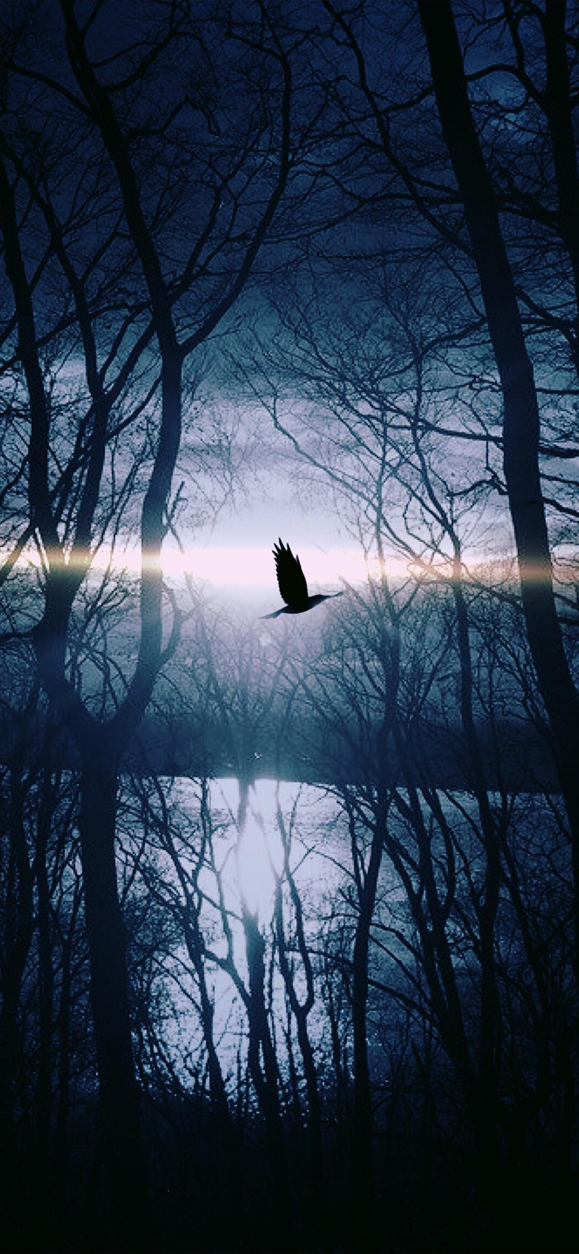 iPhoneXpapers.com-Apple-iPhone-wallpaper-nl87-wood-night-dark-nature-bird-fly-lake